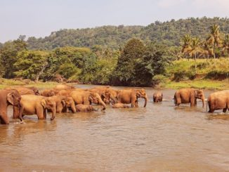 Sri-Lanka-elephants-The-Global-Scavenger-Hunt