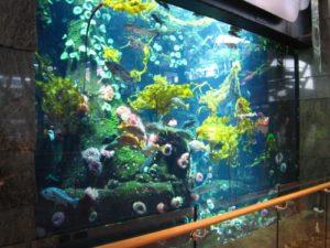 Vancouver-airport-aquarium